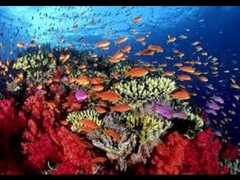 Los Corales en el Mar Caribe Guarderías del mar TvAgro por Juan Gonzalo Angel