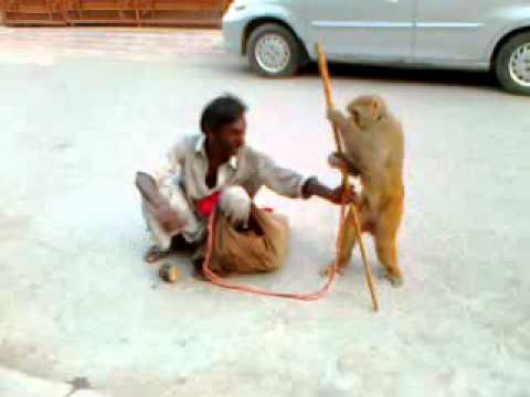 Madari and monkey ..!