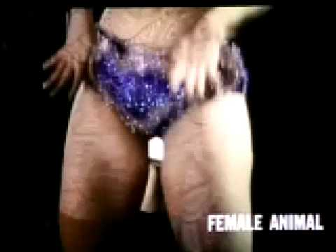 Xxx Mp4 The Female Animal 3gp Sex