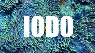 IODO - Importância, funções, sintomas de deficiência e alimentos ricos em Iodo