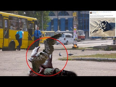 7 Mysterious Creatures Caught On Camera & Spotted In Real Life 2