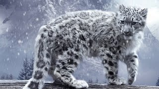 Silent Roar - Searching for the Snow Leopard (Nature/Wildlife Documentary)