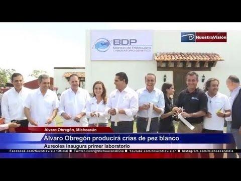 Álvaro Obregón producirá crías de pez blanco. Aureoles inaugura primer laboratorio