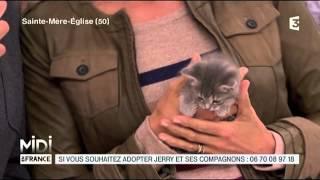 ANIMAUX : L'adoption de 4 adorables chatons