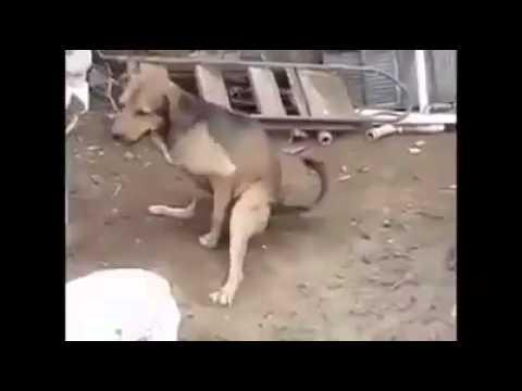 Xxx Mp4 Dog Sex Video 3gp Sex