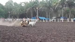 Vaqueiro Jader de Grajaú-MA, mostrando o estilo puxada a distância