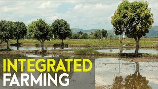 Integrated farming success : Agri business ideas in the Philippines