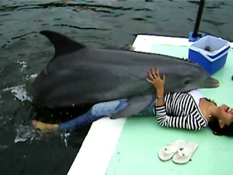 woman and dolphin free porn