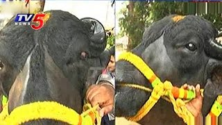 Maha Raju Bull to Participate in Sadar Festival Celebrations 2016 | TV5 News