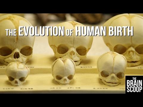 The Evolution of Human Birth