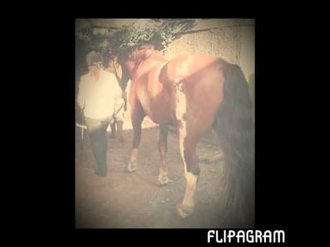 Xxx Mp4 Some Pictures Of My Horses Xxx 3gp Sex