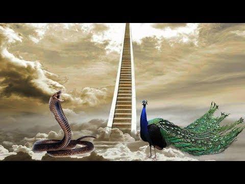 Xxx Mp4 ALLAH C C Tarafından Yılan Ve Tavus Kuşu Neden Cennetten Kovuldu Yoruma Bak 3gp Sex