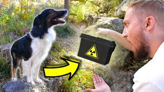 Our Dog Found a HIDDEN MYSTERY BOX at the Dog Park!