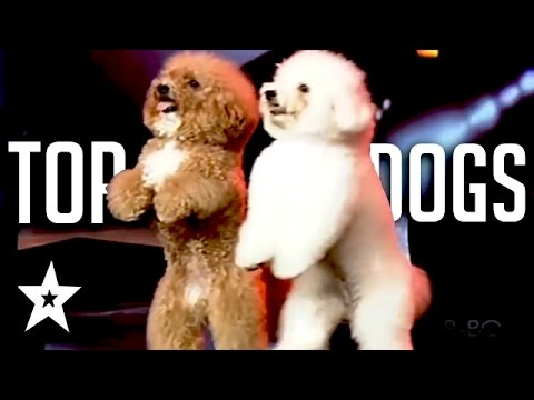 Xxx Mp4 The Best Dog Auditions EVER On Got Talent From Around The World 3gp Sex