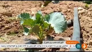 Iran Agriculture activities, Songhor & Koliayee county كشاورزي شهرستان سنقر و كوليايي ايران