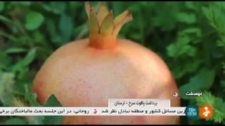 Iran Pomegranate harvest & export, Kunani rural district, KouhDasht county برداشت و صادرات انار