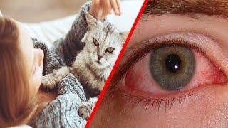القطط قد تصيبك بأحد أخطر الأمراض ... إكتشفها لتحمي نفسك