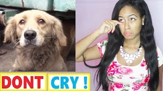 Try Not To Cry: Scared Golden Retriever Dog panics during her rescue - Watch her reaction