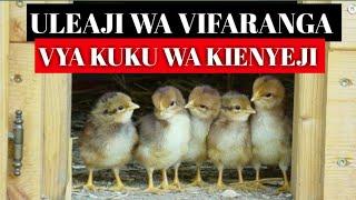 Uleaji Wa Vifaranga Vya Kuku Wa Kienyeji ep2