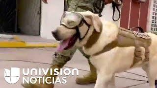 Frida, el perro rescatista que inspira a México tras el terremoto