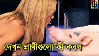 বিশ্বের সবচেয়ে বুদ্ধিমান 5 টি প্রাণী   Top 5 Awesome Talented Animals   Taza News