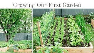 Our First Garden - Raised Vegetable Garden Tour