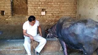India Farm Life