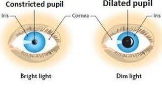 Eye structure & iris reflex for IGCSE Biology