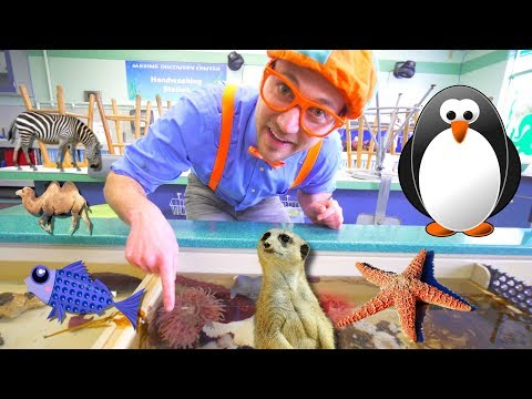 Blippi at the Zoo Learn Animals for Children and Toddlers