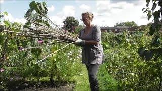Vivi's Kitchen Garden 39: Goodbye tomatoes, hello winter green manure