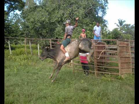 Boiada 04 Rodeio em Touros Touros em Treinamento Miracema tocantins to