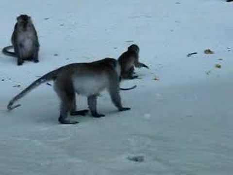 Maymun ve Pepsi