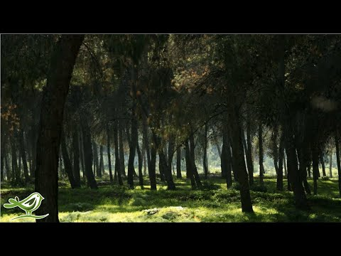 Xxx Mp4 3 Hours Of Relaxing Harp Music Healing Meditation Instrumental Sleep Music 3gp Sex