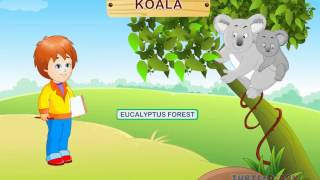 Wild Animals Video for Kids | Science Lesson for Preschool and Kindergarten