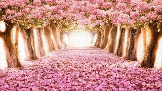 The Most Beautiful Flowers Streets in the world
