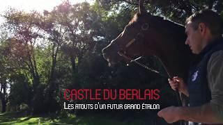 CASTLE DU BERLAIS, étalon au Haras du Lion en 2018 (clip)