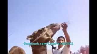Camel Drinking Bottle...