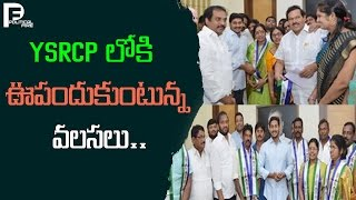 YSRCP లోకి ఊపందుకుంటున్న వలసలు.. || TDP MLA Join To YSRCP || Political Fire