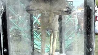TWO HEADED COW! JACKALOPE! SIAMESE DUCK! MODERN Animal Freak Show.