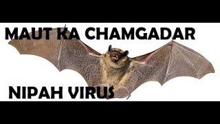 NIPAH VIRUS(DEADLY BATS) SPREADING ALL OVER INDIA
