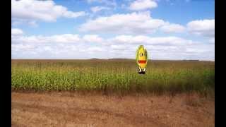 The Maize Runner
