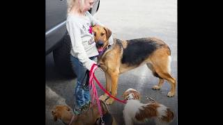 Dog Only Allows Little Girl To Rescue Him | The Dodo