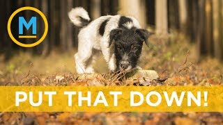 Pinecones and leaves could actually be hazardous to your dog | Your Morning