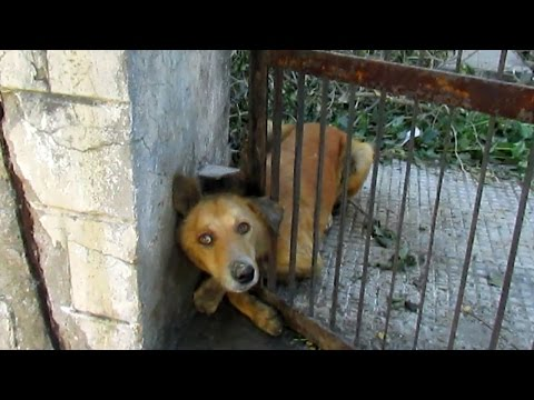 Xxx Mp4 10 Animal Rescues That Will Restore Your Faith In Humanity 3gp Sex