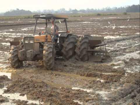 Vida de arrozeiro