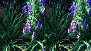 Amazing stereoscopic 3D video