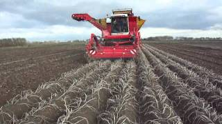 Harvesting the last potatoes! 8-11-10