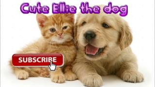 For Cute Ellie the dog!*FINALLY*