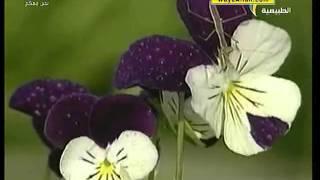 ( فراشة الطاووس المخيفة  ...ومنوعات أخرى ) : : أحياء في كل مكان : : المجد الطبيعية