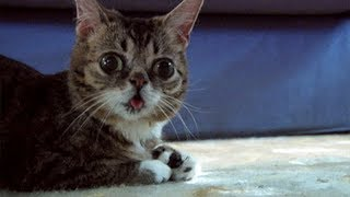 Try Not To Laugh Challenge - Funny Cats!